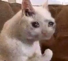Memes Humor, Cat Memes, Funny Memes, Cute Cats, Funny Cats, Funny Animals, Cute Animals, Sad Cat Meme, Gato Gif