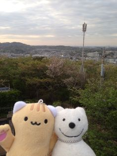 クマ散歩:衣笠山公園に品行方正なクマ出没 The Bear took a walk around Kinugasayama Park!♪☆(^O^)/  #品行方正 #Bear #クマ