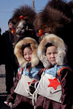 Young kids ride and race camels during Camel Festival Mongolia