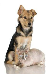 Como impedir um cãozinho de comer a comida do gato | eHow Brasil