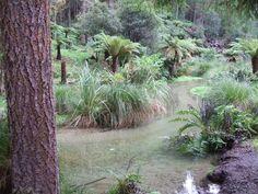 A secret Rotorua Walk - The Ponga Track