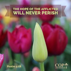 Psalm 9:18 But God will never forget the needy; the hope of the afflicted will never perish. (NIV)