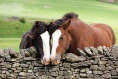 Horses in Scotland