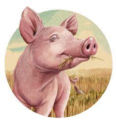 Resultado de imagem para pig illustration