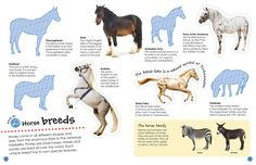 Ultimate Sticker Book: Horses and Ponies (Ultimate Sticker Books): DK: 9781465456922: Amazon.com: Books