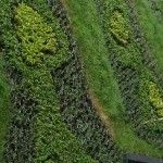 Three Plant Design Tips for Living Green Walls Green Walls, Plant Design, Urban, Tips, Plants, Advice, Planters, Plant, Planting