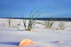 Deltona Seashells & Gifts - HOME