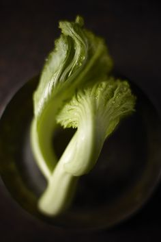 Possibly the most beautiful Bok Choy I've ever seen!