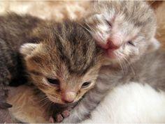 Awww, I miss having newborn kittens!