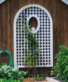 "Arch Top Lattice Panel - A plain wall is never boring when graced by the imaginative addition of a simple yet elegantly crafted lattice panel that encourages your climbing plants.  The curving arched top with cap is 81"" H, 49"" W.  Oval cut-out is 18"" H, 12"" W.  Horizontal/vertical lattice opening is 2 1/2"" sq. Lattice thickness is 5/8"" x 1 1/8"". Mounting hardware not included.  Prefinished white.  Motor freight.  Solid Cellular Vinyl."
