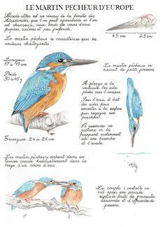 Animal Sketches, Art Drawings Sketches, Shape Photography, Nature Sketch, Nature Journal, Sketchbook Inspiration, Watercolor Animals, Vintage Artwork, Wildlife Art