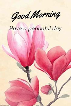 Are you looking for the best beautiful good morning quotes pictures, photos & images? Explore the best good morning images only at one platform named HappyShappy. Good Morning Flowers Rose, Good Morning Rose Images, Good Morning Flowers Pictures, Good Morning Beautiful Pictures, Good Morning Love Messages, Good Morning Images Download, Good Morning My Love, Good Morning Texts, Good Morning Picture