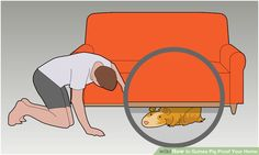 Image titled Stop your guinea pig from playing hide and seek Step 7