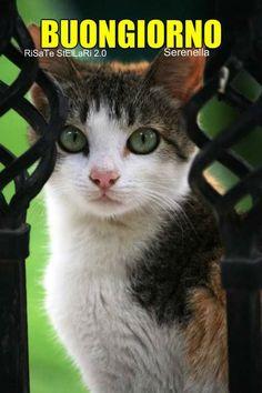 Cats, Animals, Smile, Bonjour, Gatos, Animales, Animaux, Animal, Cat