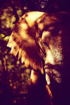 Elephants are such beautiful and smart creatures.