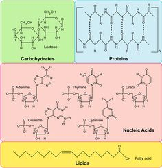 The Four Major Types of Macromolecules - Biology101 Study Guide