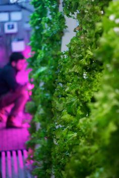 Big metal shipping containers are often used to import food from around the globe. Now, two Boston entrepreneurs are modifying those containers to grow local produce hydroponically, 365 days a year.