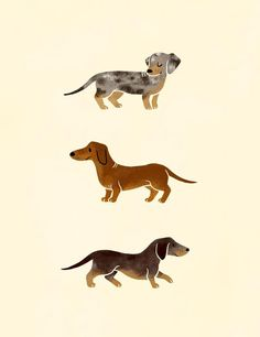 Sausages, an art print by Basil Dachshund Funny, Arte Dachshund, Dachshund Love, Daschund, Dachshund Drawing, Dachshund Tattoo, Dachshund Zeichnung, Art And Illustration, Illustrations