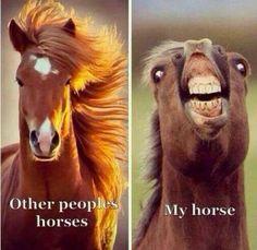 Heste citat
