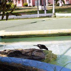 Un poquito de agua... #MiradasMagazine #MiradasRadio #Anzoategui #Turismo #Mercadeo