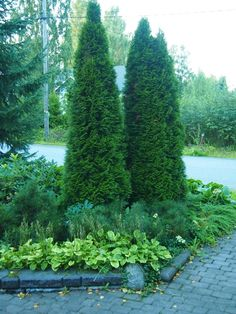 Herbs, Plants, Garden, Outdoor, Water, Conifers, Lily, Backyard