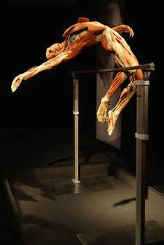 A view of a plastinated human body exhibit is seen at the 'Body Worlds', the anatomical exhibition of real human bodies by German Gunther von Hagens at Postbahnhof on May 6, 2009 in Berlin, Germany. The exhibit opens to the public on May 7.
