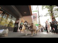 """""""Creative Juice Bangkok debuts 'Moving WiFi' campaign for Dtac in Thailand"""" Prediction: Bronze (This should just win something because of the cute dogs) :) Ads Creative, Creative Video, Pet Dogs, Pets, Use Of Technology, Florida Usa, Stunts, Over The Years, Cyber"""