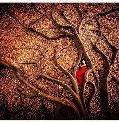 #盆景 #بونساي #盆栽 #bonsaistyle #bonsai #hediye #saksı #minyatürağaç #dekorasyon #bonsailove #babybonsai #creatyourbonsai #botany #hobby #istanbul #istiklalcaddesi #izmir #alsancak #ankara #antalya #bursa #turkey #anatolia #asia #asian #europe #america #dosomethingnew #dosomething #nevergiveup #creatyourbonsai 🌳👍