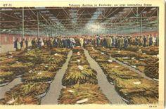 tobacco farming art prints | American Nostalgia / tobacco farming art prints - Bing Images