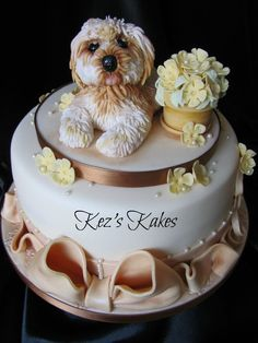 Cute 'Daisy' the Lhasa Apso Dog and Flowerpot Cake.