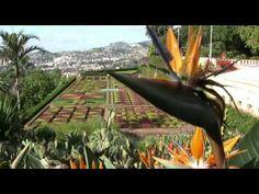 Madeira Impressionen 2011