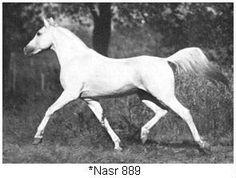 *Nasr
