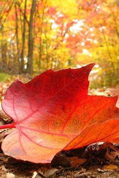 An autumn leaf.
