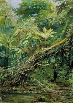 View under the Ferns at Gongo, Brazil by Marianne North; c. 1873; Oil on board; Collection: Royal Botanic Gardens, Kew, England