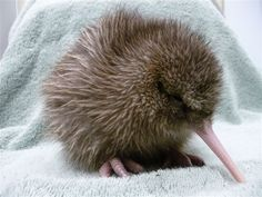 Things to do West Coast Kiwi Wildlife Centre Franz Josef