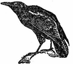 """Ravens were sacred to Apollo, the god of prophecy, and were oracular birds to him   Ravens are also associated with Mithras, and in Mithraic religion (popular among the Roman military) the first initiation was called the raven or """"servant of the sun"""".  Ravens often acted as the protectors of human seers"""