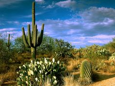The Botanical Gardens Phoenix Az Prickly Passion Pinterest