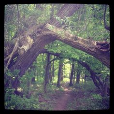 Beautiful hiking trail in Victor, NY.