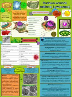 Komórka roślinna i zwierzęca (Cell) Animal Cell, Plant Cell, Cell Wall, Life Questions, School Notes, Life Science, Classroom, Education, Multimedia