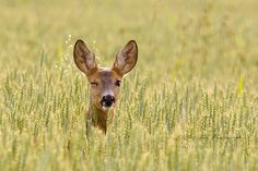 The winking deer by Mariann Rea on 500px
