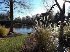 Winter at the Missouri Botanical Garden. Ornamental grass and lake in the Japanese Garden. Missouri Botanical Garden, Botanical Gardens, Ornamental Grasses, Japanese, Winter, Plants, Outdoor, Winter Time, Outdoors