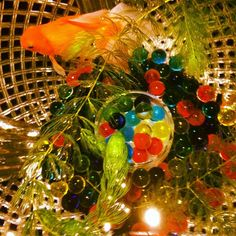 #EverydayLives #EnjoyingLife #HelloWorld #Japan #アクアリウム #金魚 #kingyo #aquarium