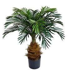 Image result for palmen