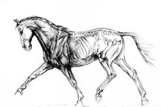 skeleton horse - Google zoeken