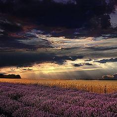Lavender field, Bulgaria