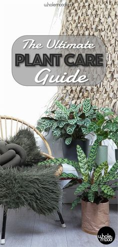 Do you struggle to keep your houseplants thriving? This guide is here to help. Check out everything you need to know to keep your houseplants alive and lush! #plants #sustainability #houseplants #biophilia Plant Care, Plants, Flora, Plant, Planting