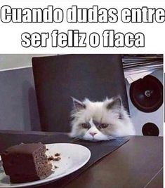 Read secreto from the story TU SECRETO + MEMES (meta: lecturas) by SiloDeFelippe (SILO) with reads. Funny Cats, Funny Jokes, Funny Animals, Hilarious, Funny Images, Funny Pictures, Haha, Spanish Humor, New Memes