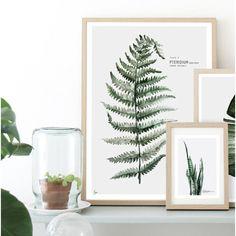Affiche Urban botanic Pteridium - Twicy Store