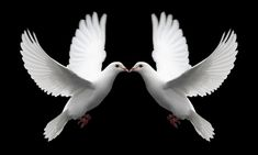 Love doves that symbolize love -Romantic Love Pictures Love Birds, Beautiful Birds, Pigeon, Romantic Love Pictures, Dove Release, Brust Tattoo, Dove Tattoos, Celtic Tattoos, Tatoos