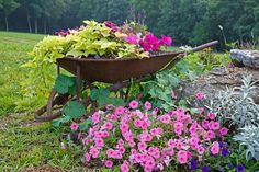 This extremely old wheelbarrow even sports a metal wheel with no tread! Practically merging with the ground, it's filled with bright flowers and lush greenery, spilling to the grass.
